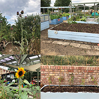 Samantha Johnston - volunteering Peckham community garden