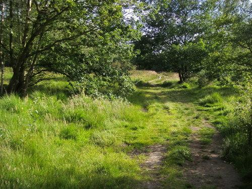 wimbledon-common-green-spaces-london