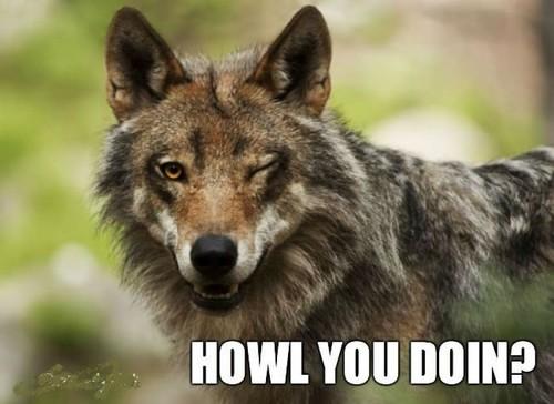 fox meme