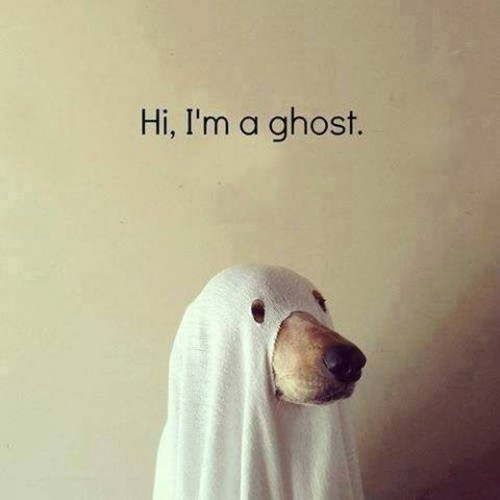 ghost meme